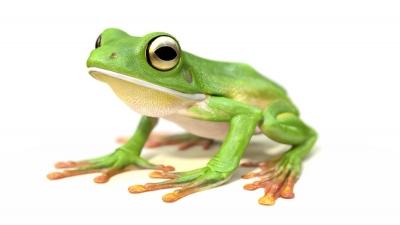 V Frog Kpm visual distract...
